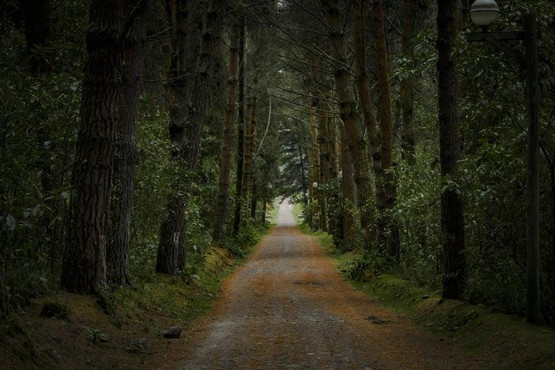 El Boliche- Bosque